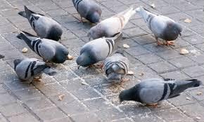 control de aves urbanas Barcelona